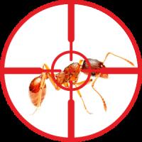 destruction-of-ants