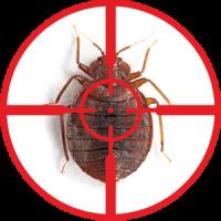 destruction-of-bed-bugs