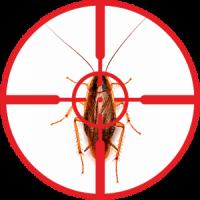 destruction-of-cockroaches