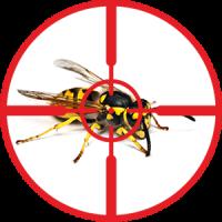 destruction-of-wasps